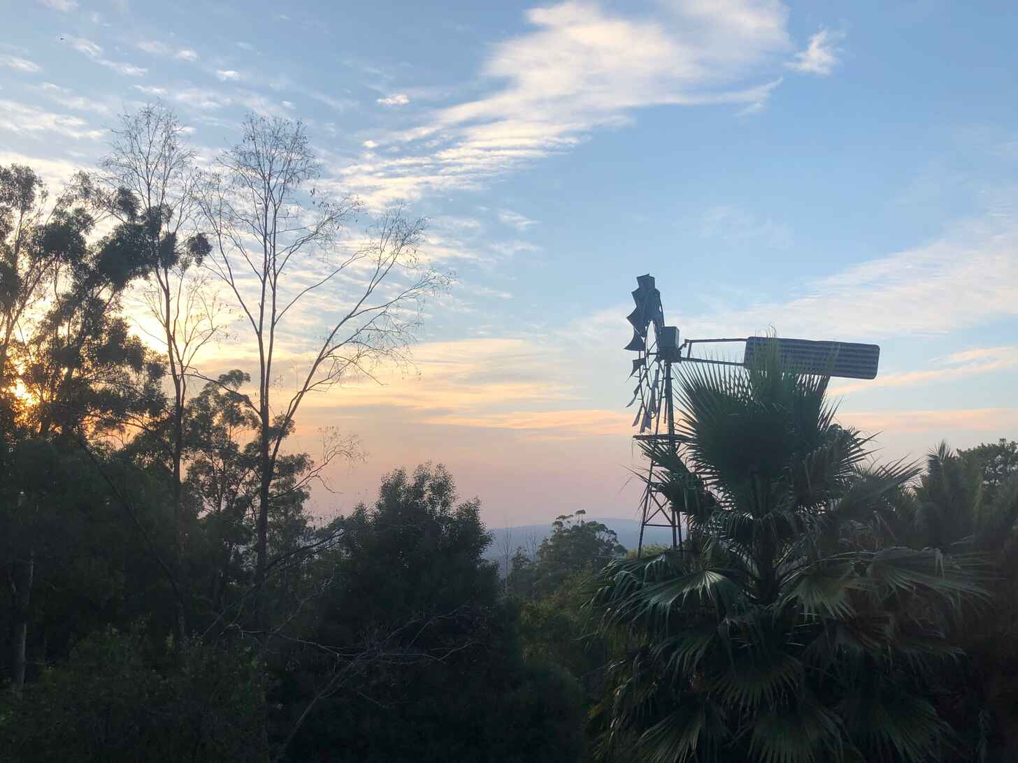 Photo of a sunrise with trees and windmill visible